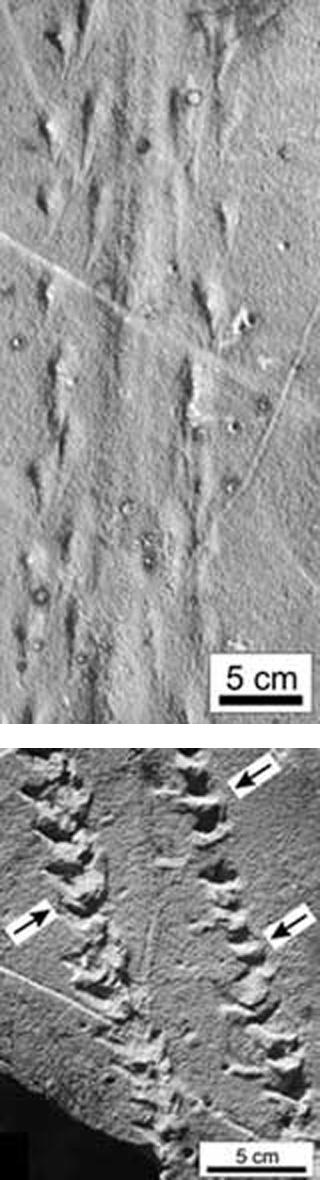 Las primeras huellas terrestres conocidas.