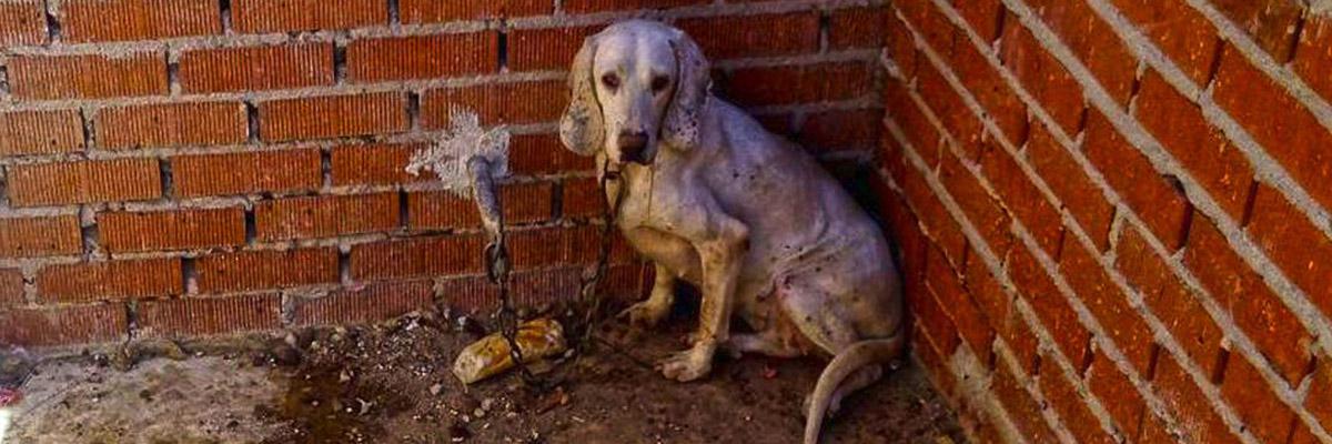 Imagen de uno de los perros rescatados, cedida por El Refugio. EFE